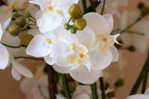 Orchidee7203